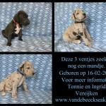 Nog 3 pups beschikbaar